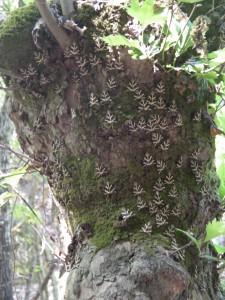Rodosz pillangók völgye